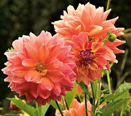 Ordinaire Jakes Garden Center Flowers Plants Trees Shrubs Watertown NY