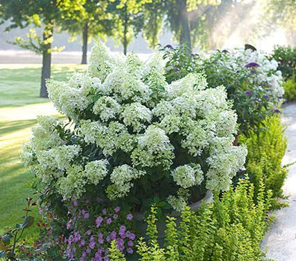 Jakes Garden Center Flowers Plants Trees Shrubs Watertown NY